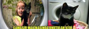 Çamaşır makinasında unutulan kedi,50 derecede 1 saatlik yıkamadan sağ çıktı