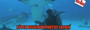 Köpek balığını hipnotize ederek avucunun içinde uyuttu