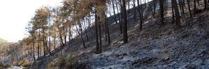 Kumluca'daki yangın nihayet söndürüldü! 170 hektar alan yandı