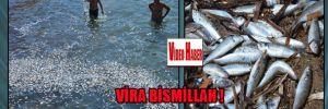 Dikili'de tonlarca ölü balık denize döküldü