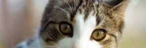 İngiltere'de ilk kez bir hayvanda koronavirüs görüldü