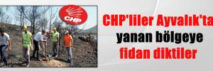 CHP'liler Ayvalık'ta yanan bölgeye fidan diktiler