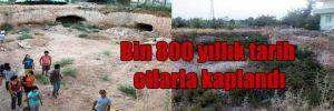 Bin 800 yıllık tarih otlarla kaplandı