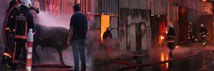 İstanbul'da kurbanlıkların bulunduğu barınakta yangın!