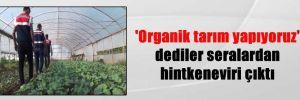 'Organik tarım yapıyoruz' dediler seralardan hintkeneviri çıktı