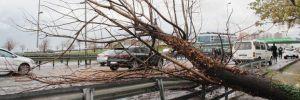 Zeytinburnu'nda şiddetli rüzgar nedeniyle ağaç devrildi
