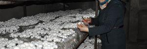 Hobi olarak başladığı mantar üretiminde talebi karşılayamıyor