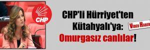 CHP'li Hürriyet'ten Kütahyalı'ya: Omurgasız canlılar!