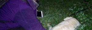 Bodrum'da bir köpek daha öldürüldü