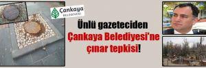 Ünlü gazeteciden Çankaya Belediyesi'ne çınar tepkisi!