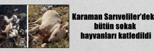 Karaman Sarıveliler'deki bütün sokak hayvanları katledildi