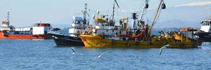 Türk balıkçılara kötü haber!