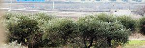 PYD'den sivillere 'Afrin'i terk etmeyin' baskısı