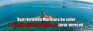 'Aşırı kirlenen Marmara bu sefer besin zinciri vasıtasıyla da zarar verecek'