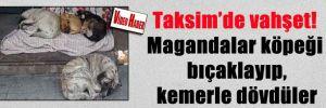 Taksim'de vahşet! Magandalar köpeği bıçaklayıp, kemerle dövdüler