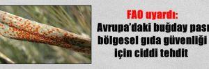 FAO uyardı: Avrupa'daki buğday pası bölgesel gıda güvenliği için ciddi tehdit