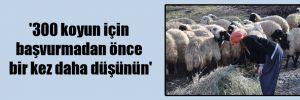 '300 koyun için başvurmadan önce bir kez daha düşünün'