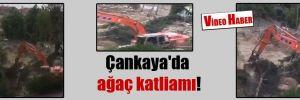 Çankaya'da ağaç katliamı!