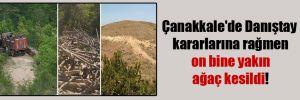 Çanakkale'de Danıştay kararlarına rağmen on bine yakın ağaç kesildi!