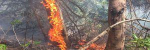 Bodrum ve Didim'de de yangın çıktı