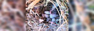 Kaçak yapıların yıkımına kuş yuvası engeli