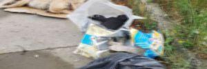 Yine Sakarya! 5 yavru köpek ölü bulundu