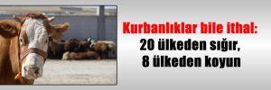 Kurbanlıklar bile ithal: 20 ülkeden sığır, 8 ülkeden koyun