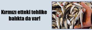 Kırmızı etteki tehlike balıkta da var!