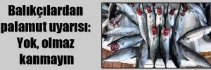 Balıkçılardan palamut uyarısı: Yok, olmaz kanmayın