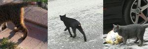 Gazi Mahallesi'nde iğrenç olay! Kedilerin kuyruklarını kesiyorlar