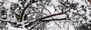Erzurum ve Ardahan'da kar sürprizi