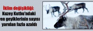İklim değişikliği: Kuzey Kutbu'ndaki ren geyiklerinin sayısı yarıdan fazla azaldı