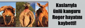 Kaslarıyla ünlü kanguru Roger hayatını kaybetti!