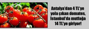 Antalya'dan 4 TL'ye yola çıkan domates, İstanbul'da mutfağa 14 TL'ye giriyor!