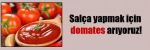 Salça yapmak için domates arıyoruz!