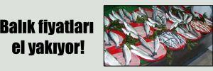 Balık fiyatları el yakıyor!