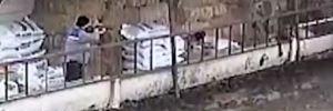 Uyuşturucuyla vurulan köpek sürüklenerek çöp arabasına atıldı