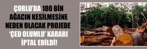 Çorlu'da 180 bin ağacın kesilmesine neden olacak projede 'ÇED olumlu' kararı iptal edildi!