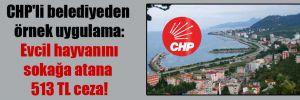 CHP'li belediyeden örnek uygulama: Evcil hayvanını sokağa atana 513 TL ceza!