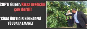 CHP'li Gürer: Kiraz üreticisi çok dertli!