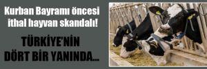 Kurban Bayramı öncesi ithal hayvan skandalı!