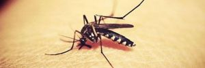 İstanbul'da 4 kişide 'Batı Nil Virüsü' enfeksiyonu tespit edildi