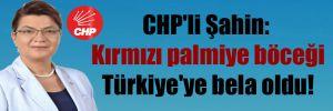 CHP'li Şahin: Kırmızı palmiye böceği Türkiye'ye bela oldu!