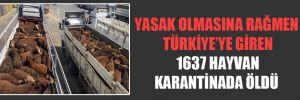 Yasak olmasına rağmen Türkiye'ye giren 1637 hayvan karantinada öldü