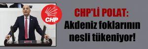 CHP'li Polat: Akdeniz foklarının nesli tükeniyor!