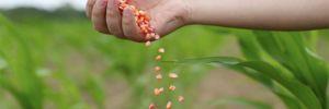'Milli Tarım Yerli Tohum' projesi hasat verdi!