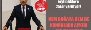 CHP'li Polat: Devlet eliyle zeytinliklere zarar veriliyor!