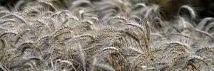 Çiftçi başına borç 49 bin TL'ye dayandı!