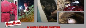 9 yavru köpek AKUT'un bir buçuk saatlik operasyonuyla kurtarıldı!