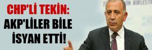 CHP'li Tekin: AKP'liler bile isyan etti!